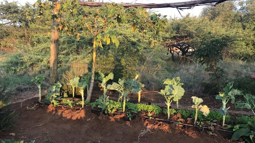 Schülergarten im Lewa-Bildungszentrum im LWC in Kenia.
