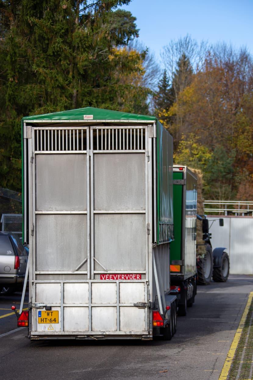 Ankunft einer Netzgiraffe im Zoo Zürich.