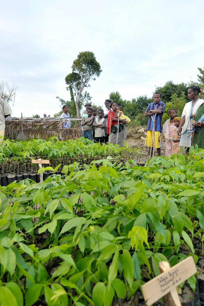Neue Bäume für den Masoala Regenwald werden gezogen und ausgepflanzt.